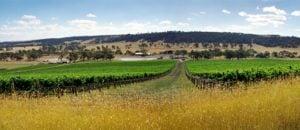 Anakie vineyard